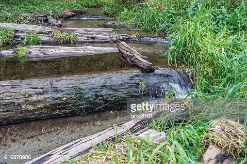 Stream And Driftwood : Stock Photo
