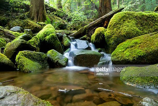 Stream and Moss