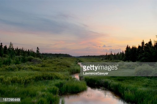 stream, central Minnesota wilderness