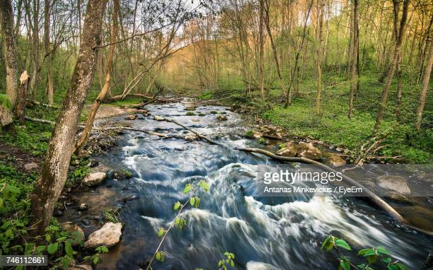 Stream Flowing In Forest Against Sky