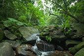 Stream flowing in tropical rainforest, Okinawa