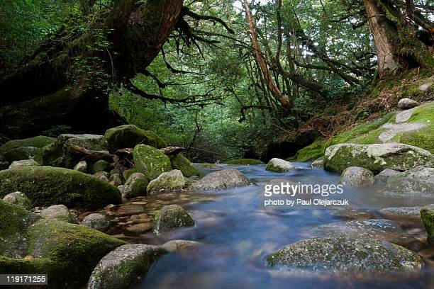 Stream flows through moss covered ravine