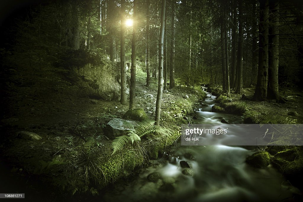 Stream in a forest : Stock Photo