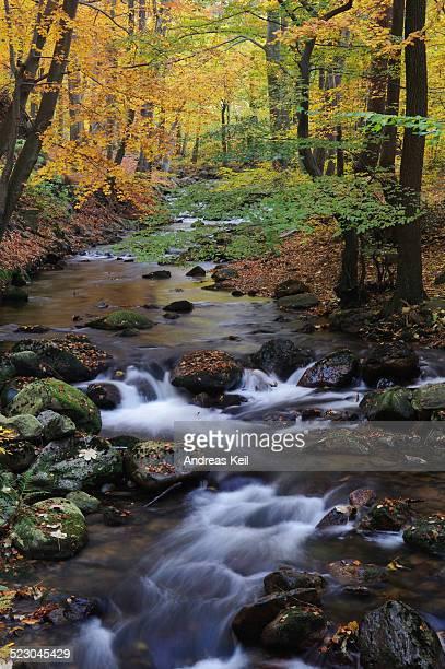 Stream in autumn, Ilse, Ilsetal valley, Harz, Saxony-Anhalt, Germany, Europe