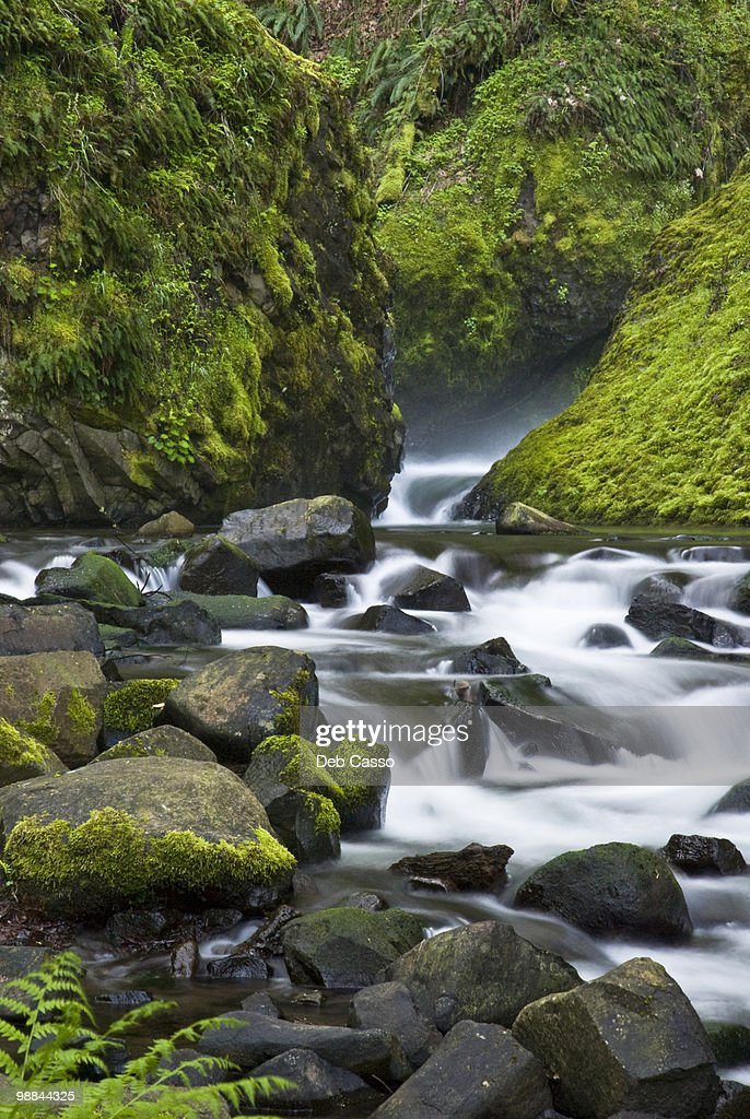 Stream in Bridal Veil Falls State Park, Oregon : Stock Photo