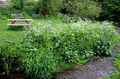 Photo showing wooden picnic tables by a trickling stream in the countryside, leading to a large fast flowing river that is edged either side by wildflowers, such as the white flowers of cow parsley (a