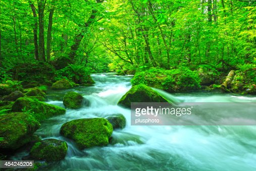 Stream in green forest : Stock Photo