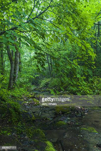 Stream in Greenbrier, Great Smoky Mountains NP