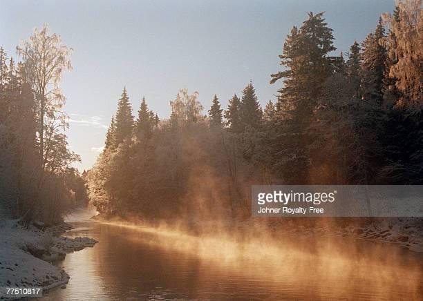 A stream in morning light Bergslagen Sweden.