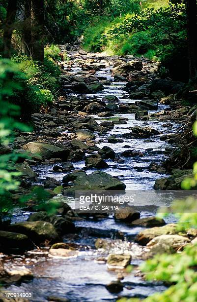 A stream in River Bayehon valley High Fens Natural Reserve Ardennes Belgium