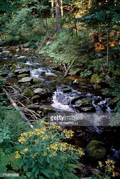 A stream in the Bavarian Forest National Park Bavaria Germany