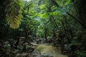 Stream in tropical rainforest jungle, Ishigaki