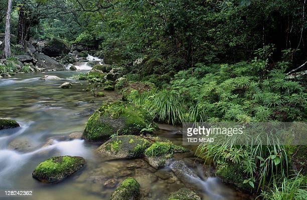 stream in world heritage area daintree forest, qld, australia