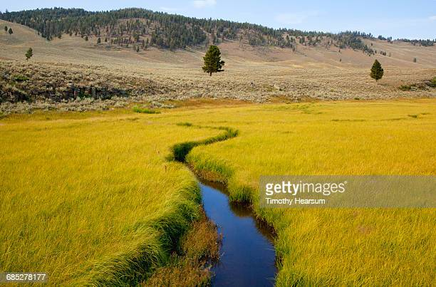 Stream meanders through blowing yellow grasses