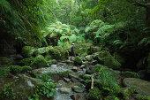 Stream trekking through tropical rainforest jungle