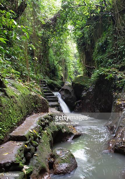 Stream, Ubud Monkey Forest