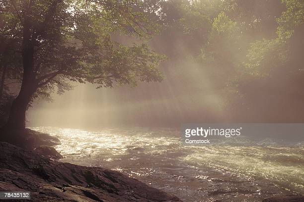 Stream with tree and sunbeams