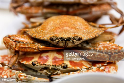 Streamed Horse Crabs Stacked on The White Plate : Foto stock