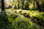 The Lower, Central and Upper Gardens are Grade II* public parks, leading for several miles down the valley of the River Bourne through the centre of the town to the sea Bournemouth has a further 425 a