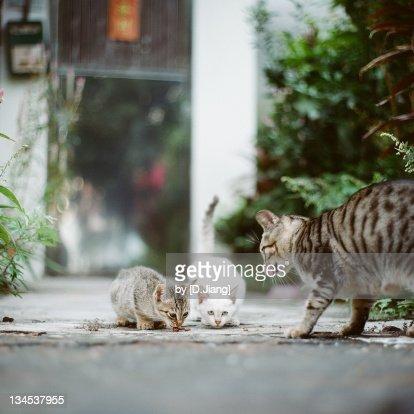 Street cat feeding