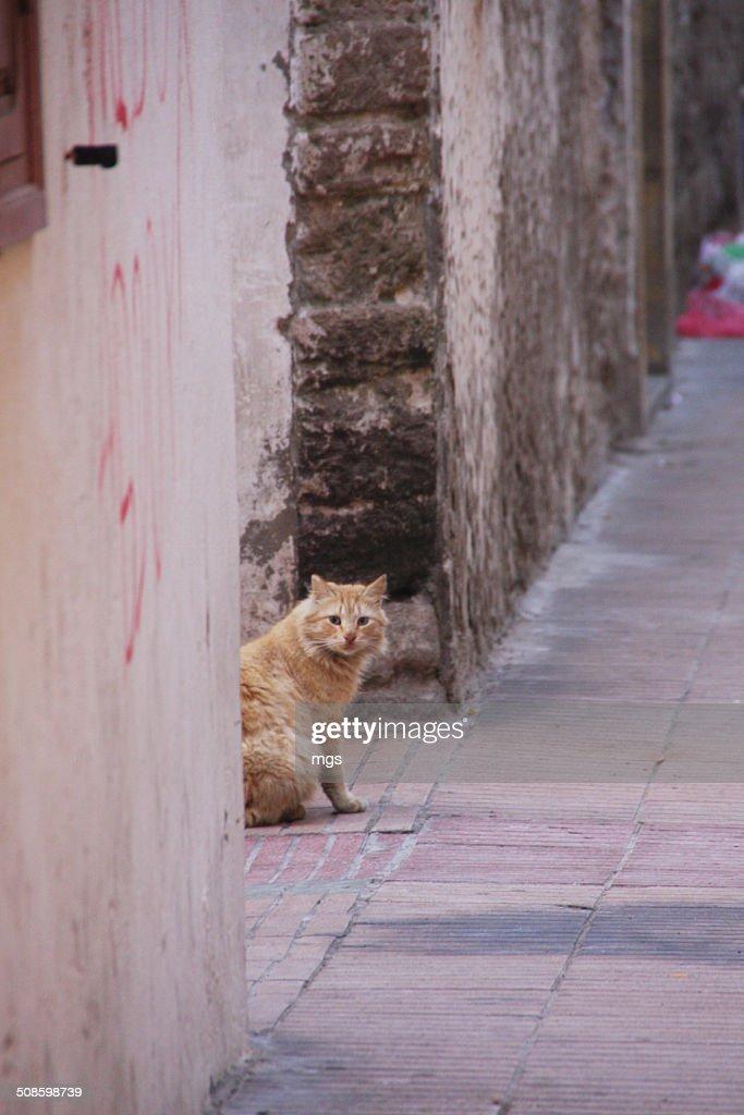 Street cat : Stock Photo