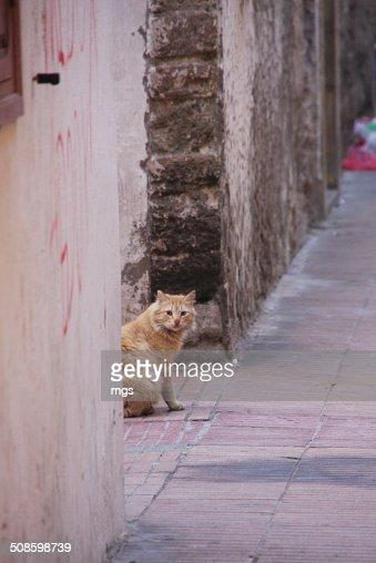 Street cat : Foto de stock