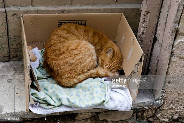 Street cat sleeping