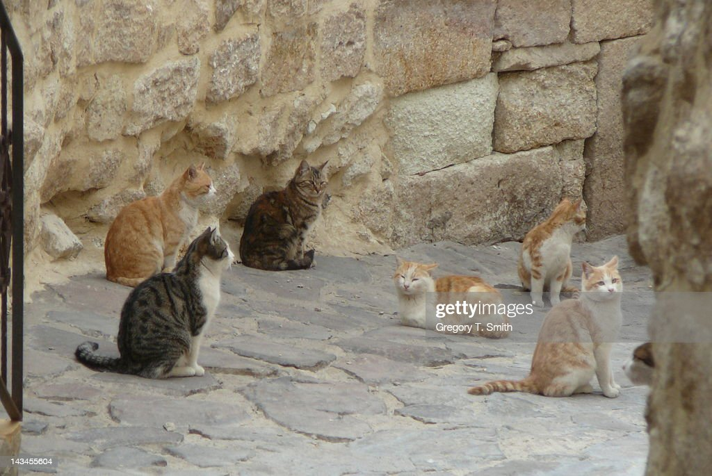Street cats in Cappadocia : Stock Photo