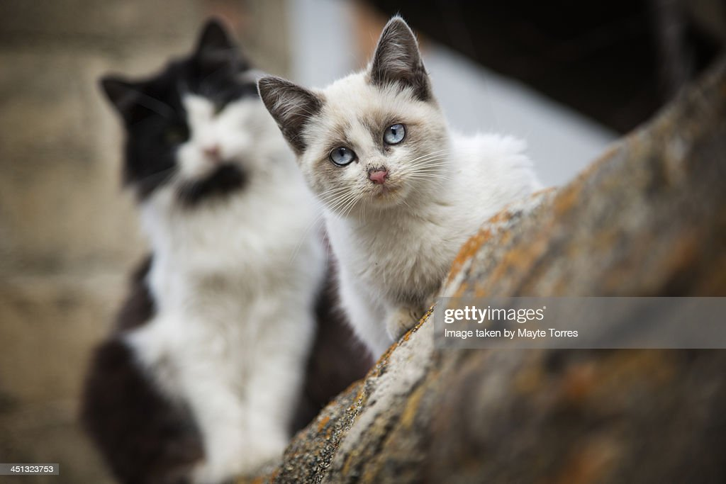 Street cats : Stock Photo