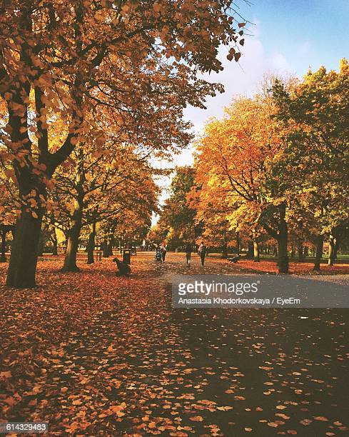 Street Covered With Leaves Amidst Trees During Autumn