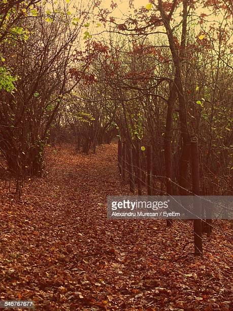 Street Covered With Leaves By Fence In Forest