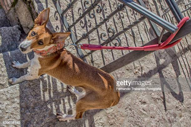 Street dog tied to a railing