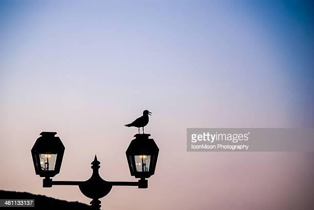 Street Light Is My Home...