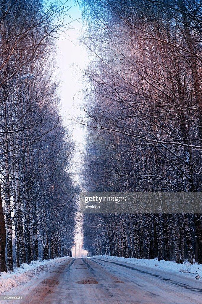 street trees winter empty : Stock Photo