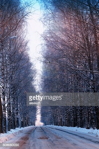 street trees winter empty : Stock Photo