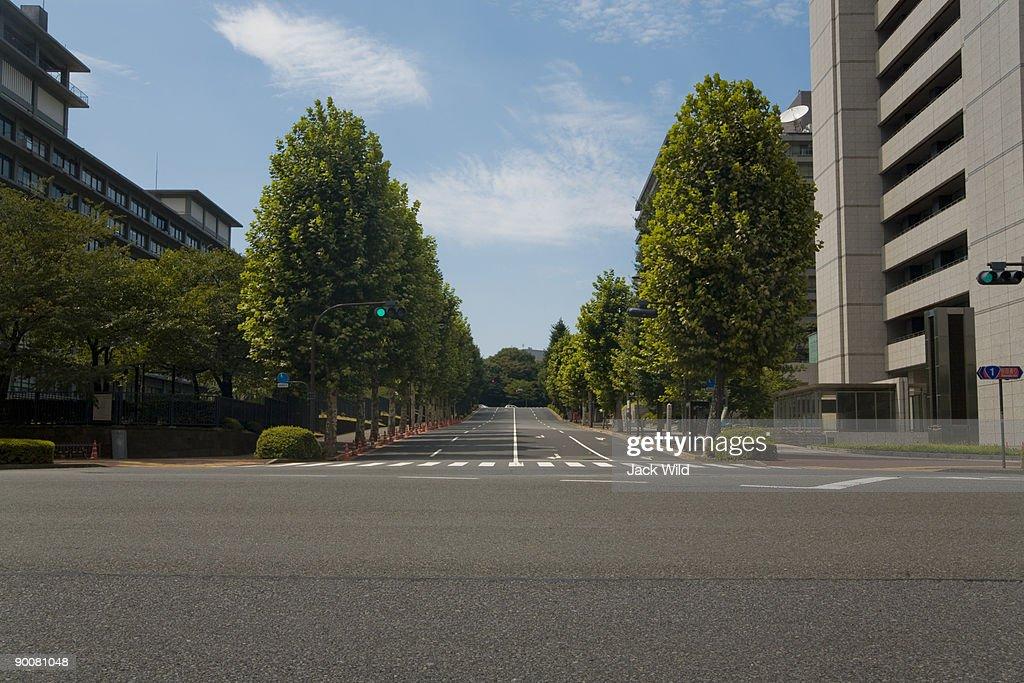 Street with trees : Stock Photo
