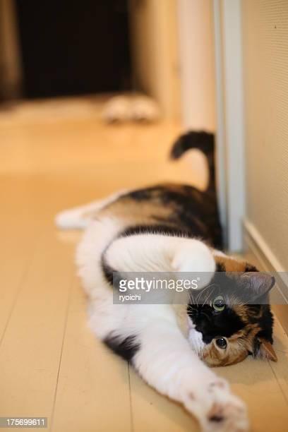 Stretch cat