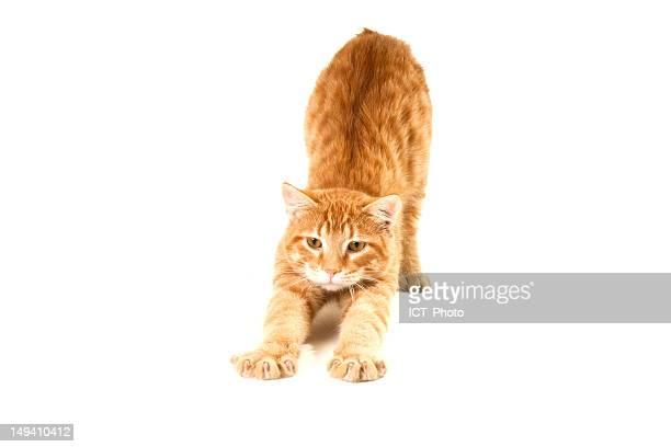 Stretching cat