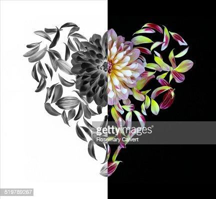 Strikingly split, dahlia and petal heart.