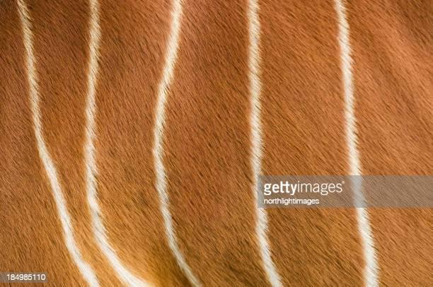 Striped antelope fur