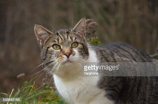 striped cat : Stockfoto
