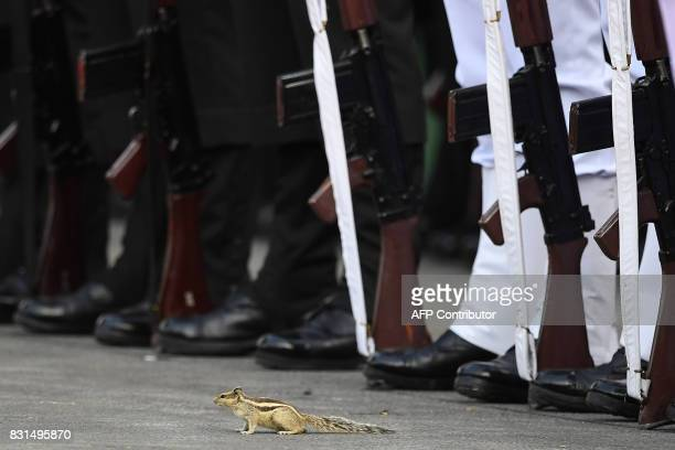 A striped squirrel is seen beside an Indian guard of honour contingent during the country's 71st Independence Day celebrations which marks the 70th...