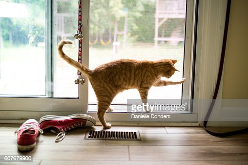 Striped tabby cat tries to open patio door to go outside