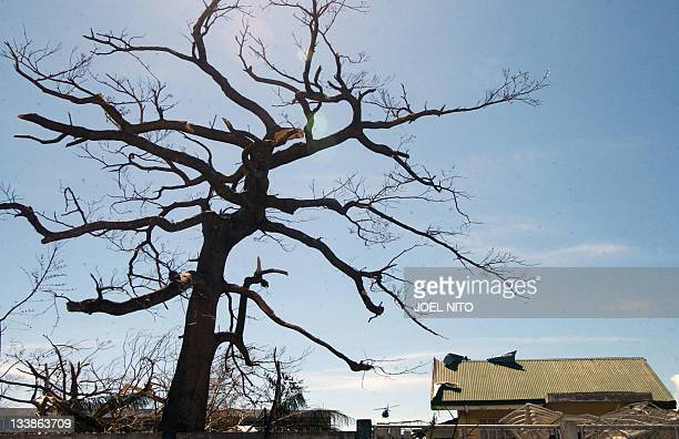 A stripped bare tree is seen near a house damaged in the eastern Philippine island of Catanduanes by super typhoon Durian which hit the country last...