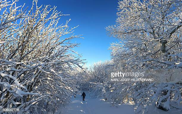 A stroller walks through the snow on January 21 2016 on the Kreuzberg hill near Bischofsheim north of Wuerzburg southern Germany / AFP / dpa /...