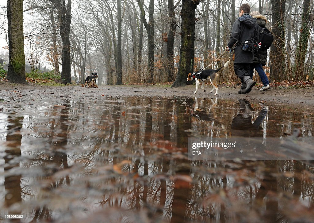 Strollers walk their dogs past puddles in a park in Hamburg, northern Germany, on January 5, 2013.