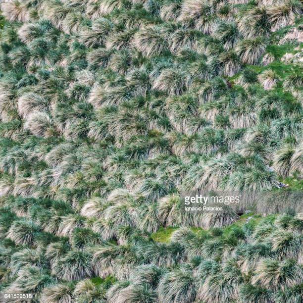 Stromness bush