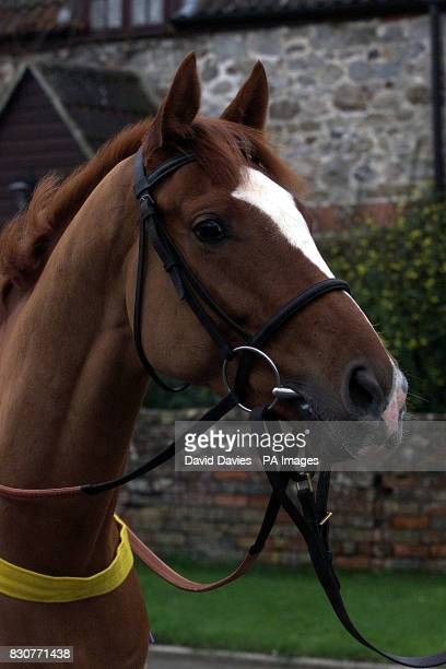 Stromness trained by Alan King At his stable in Marlborough Wiltshire At his open day Photo David Davies