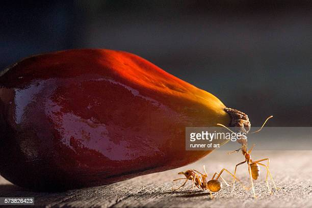 Strong ants