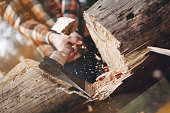 Strong lumberjack cuts a big tree. Wood chips fly apart